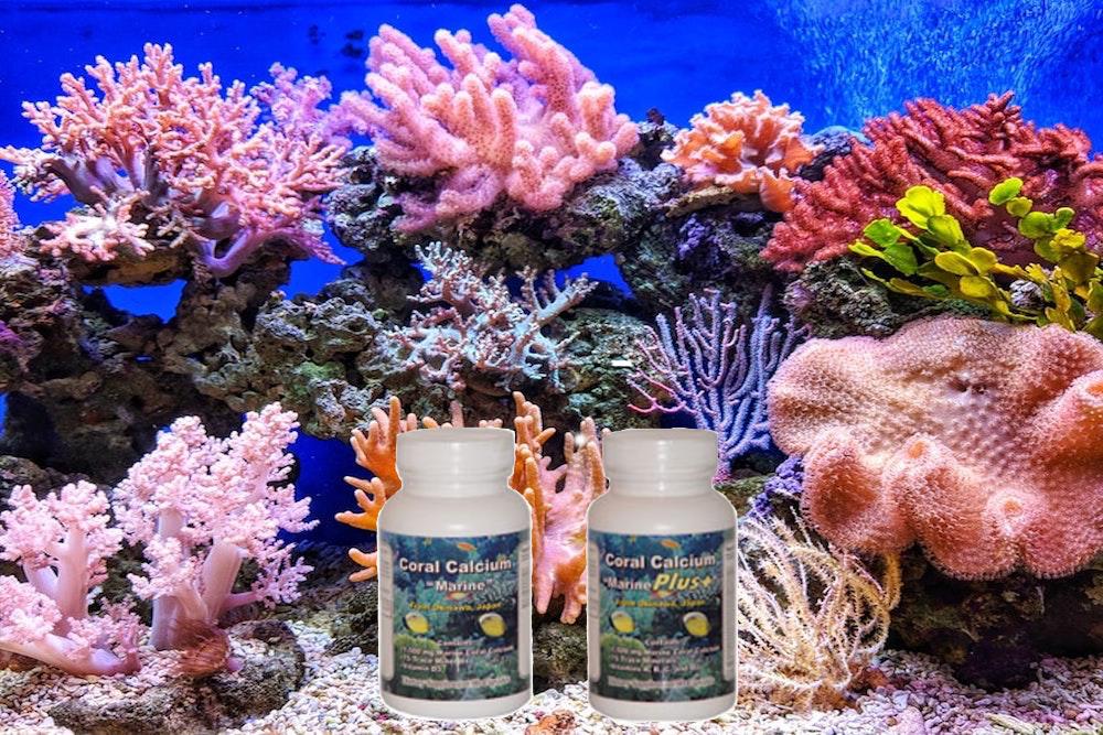 calcio de coral